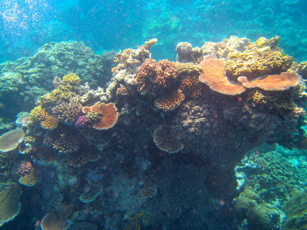Snorkeling the Great Barrier Reef 42
