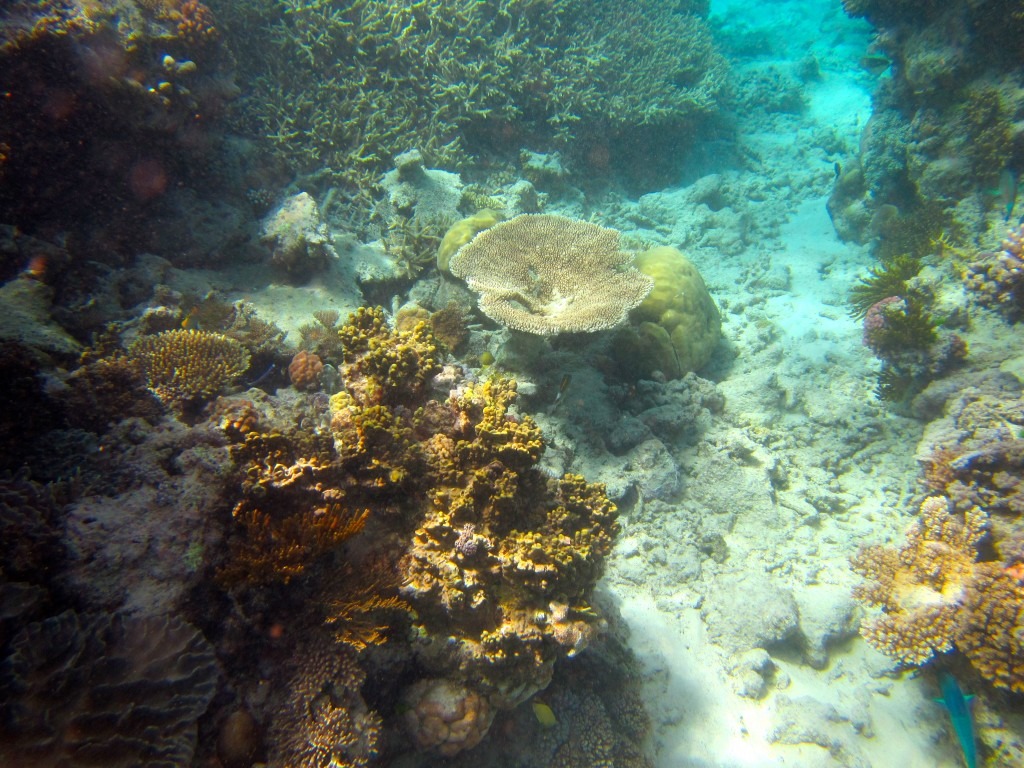 Snorkeling the Great Barrier Reef 4