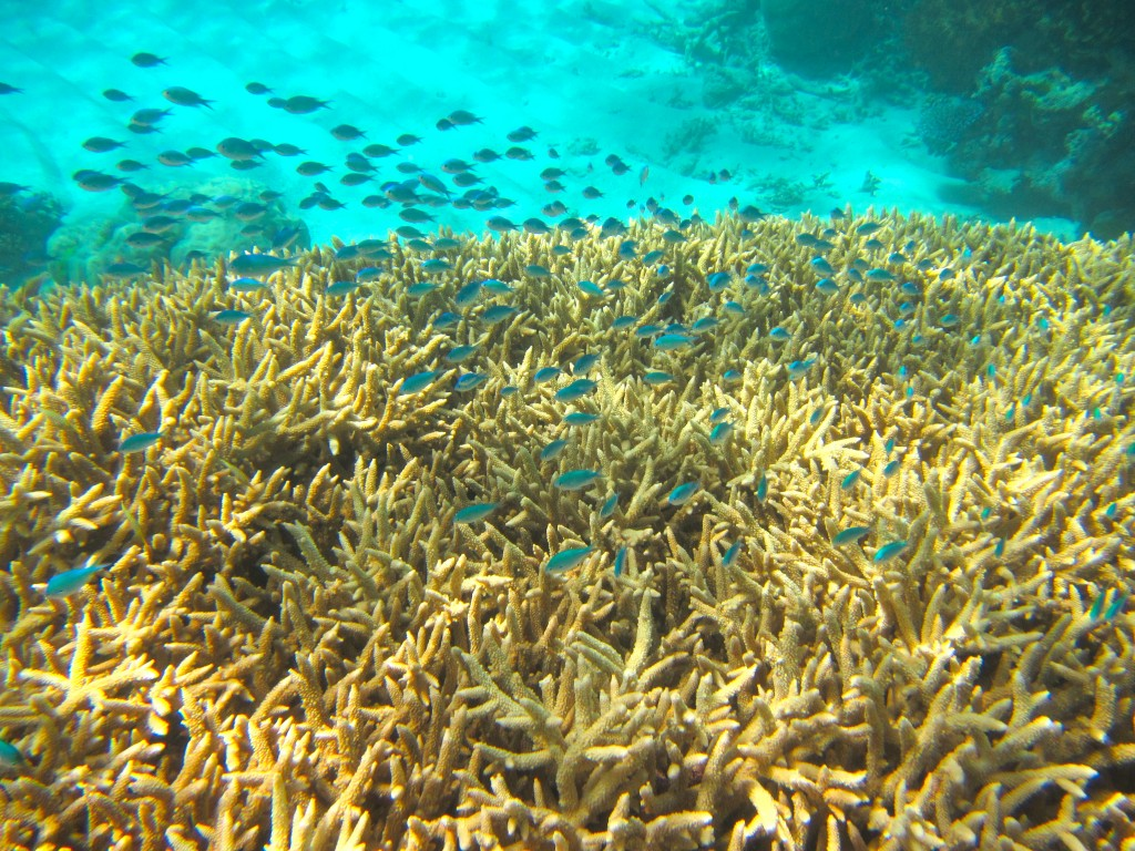 Snorkeling the Great Barrier Reef 3