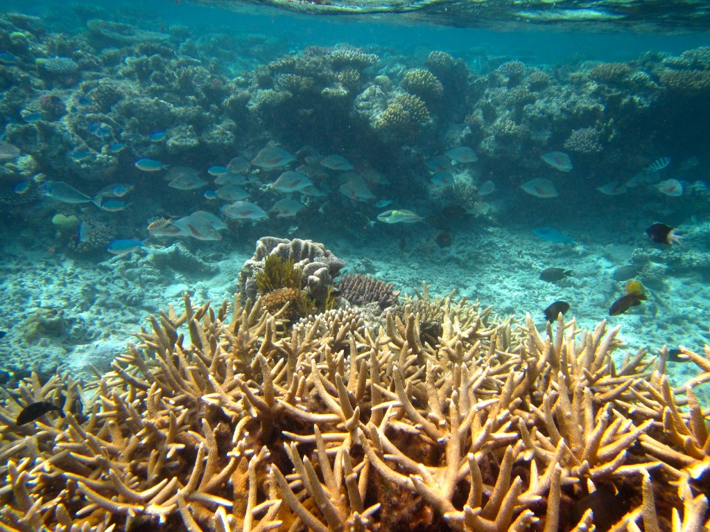 Snorkeling the Great Barrier Reef 1