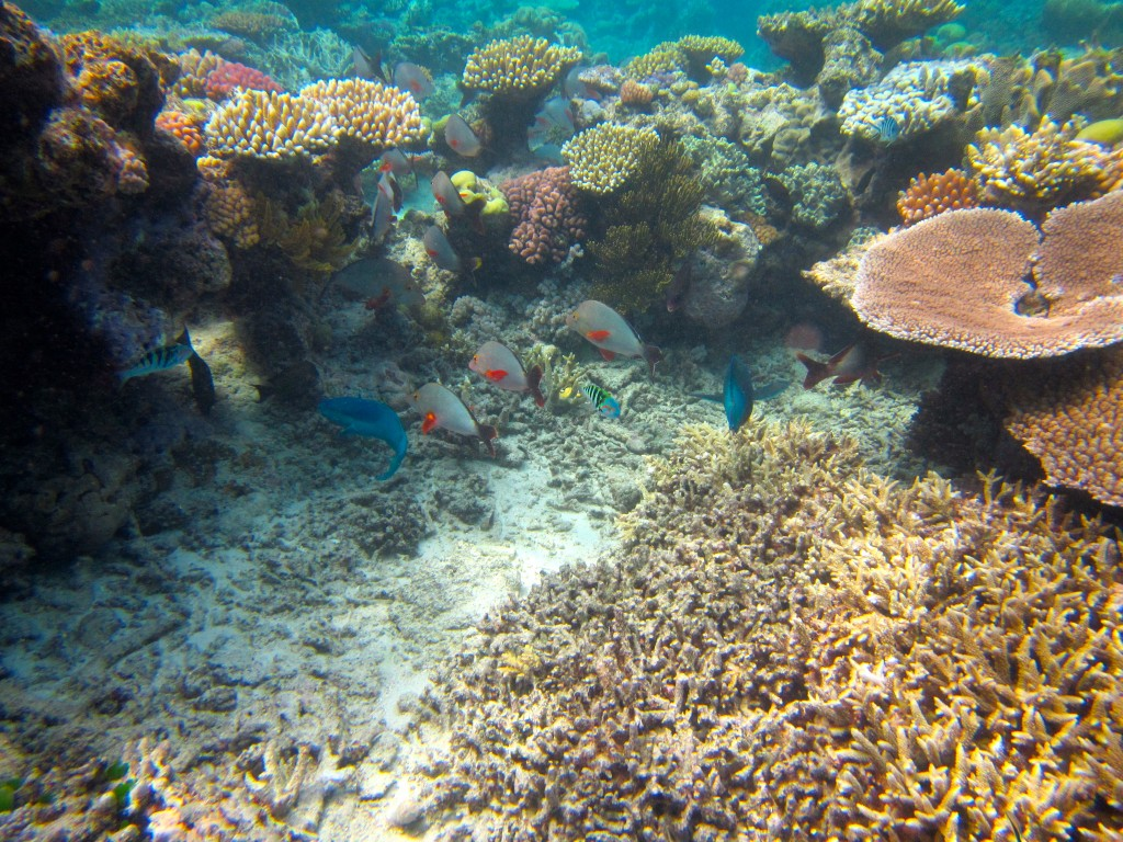 Snorkeling the Great Barrier Reef 9