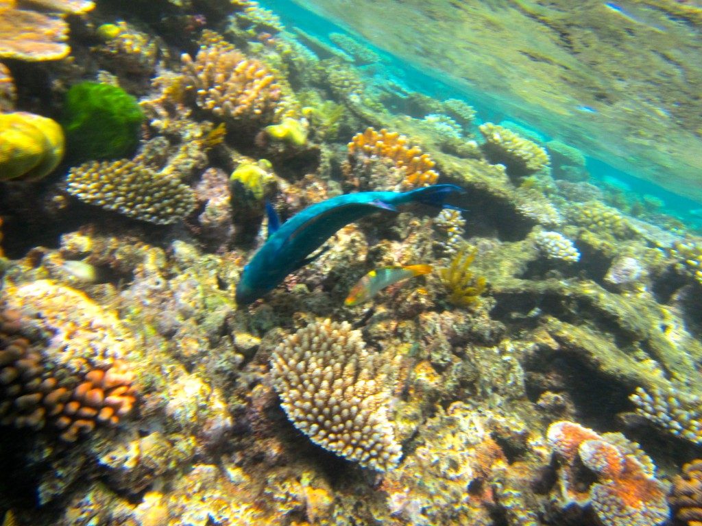 Snorkeling the Great Barrier Reef 11