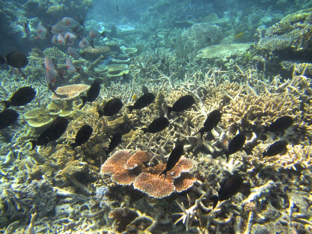 Snorkeling the Great Barrier Reef 12