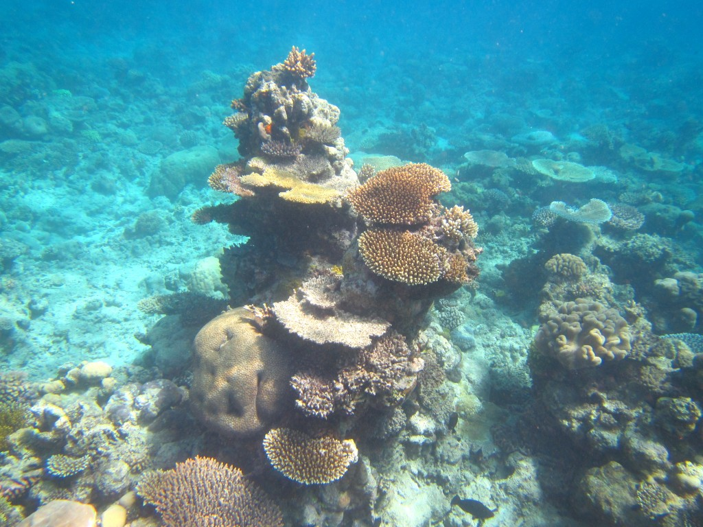 Snorkeling the Great Barrier Reef 13
