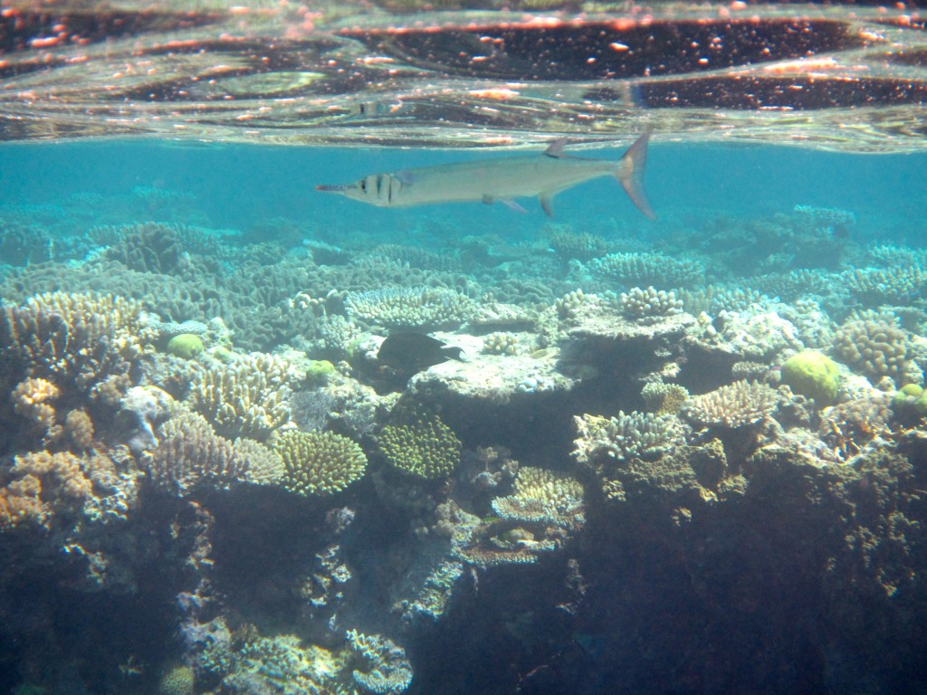 Snorkeling the Great Barrier Reef 35