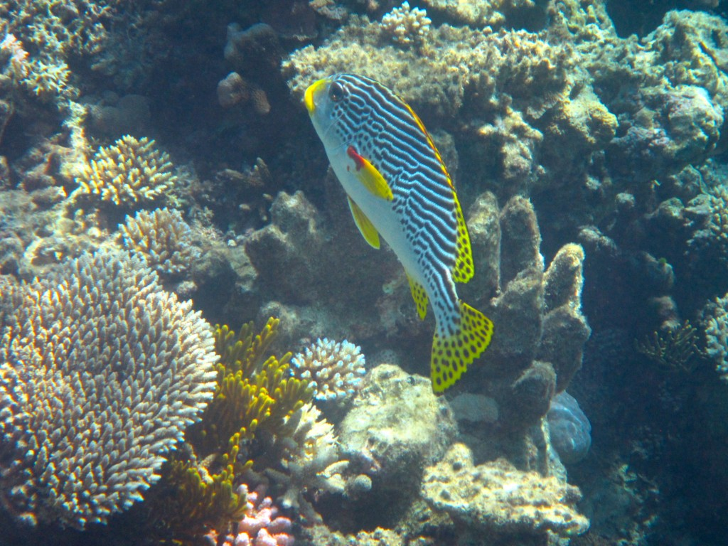 Snorkeling the Great Barrier Reef 31