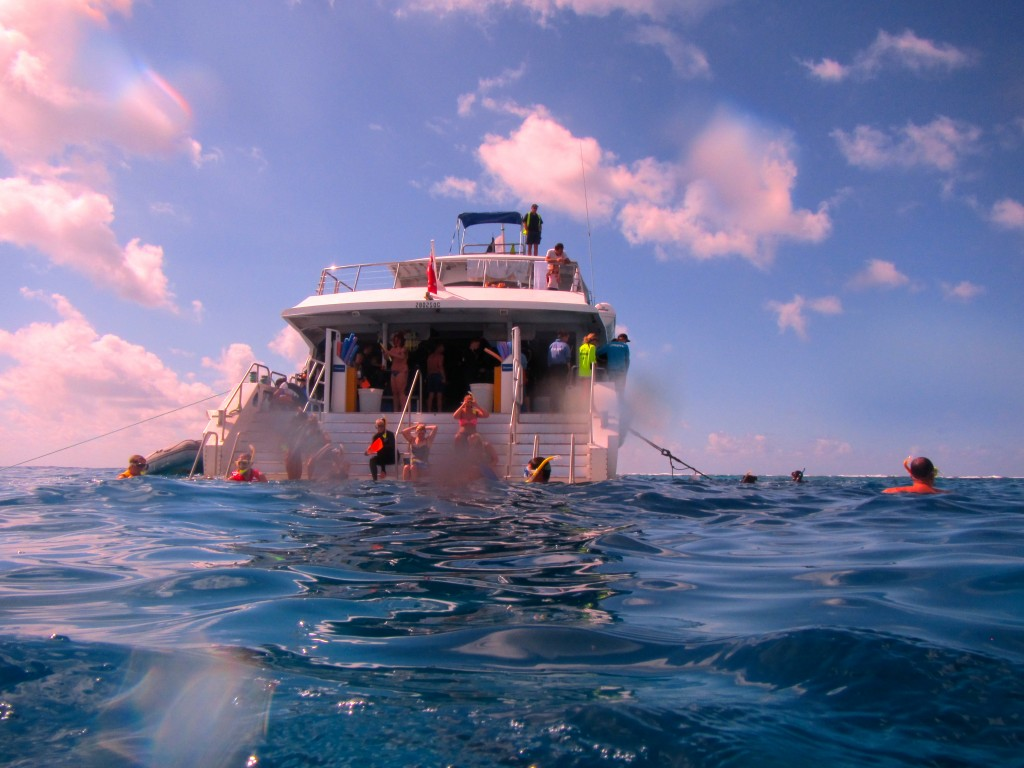 Snorkeling the Great Barrier Reef 28