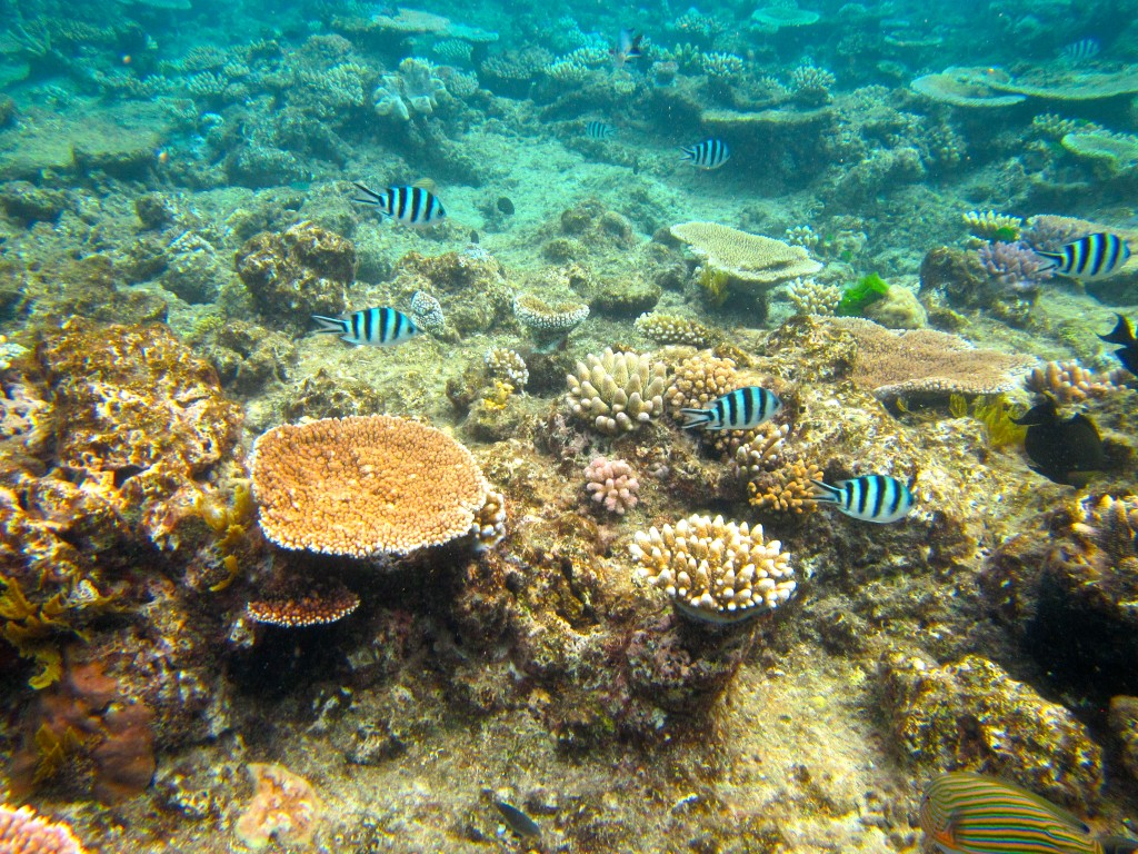 Snorkeling the Great Barrier Reef 36