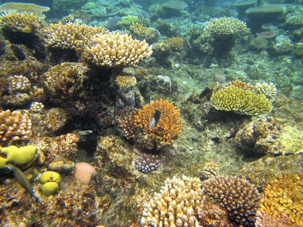 Snorkeling the Great Barrier Reef 38