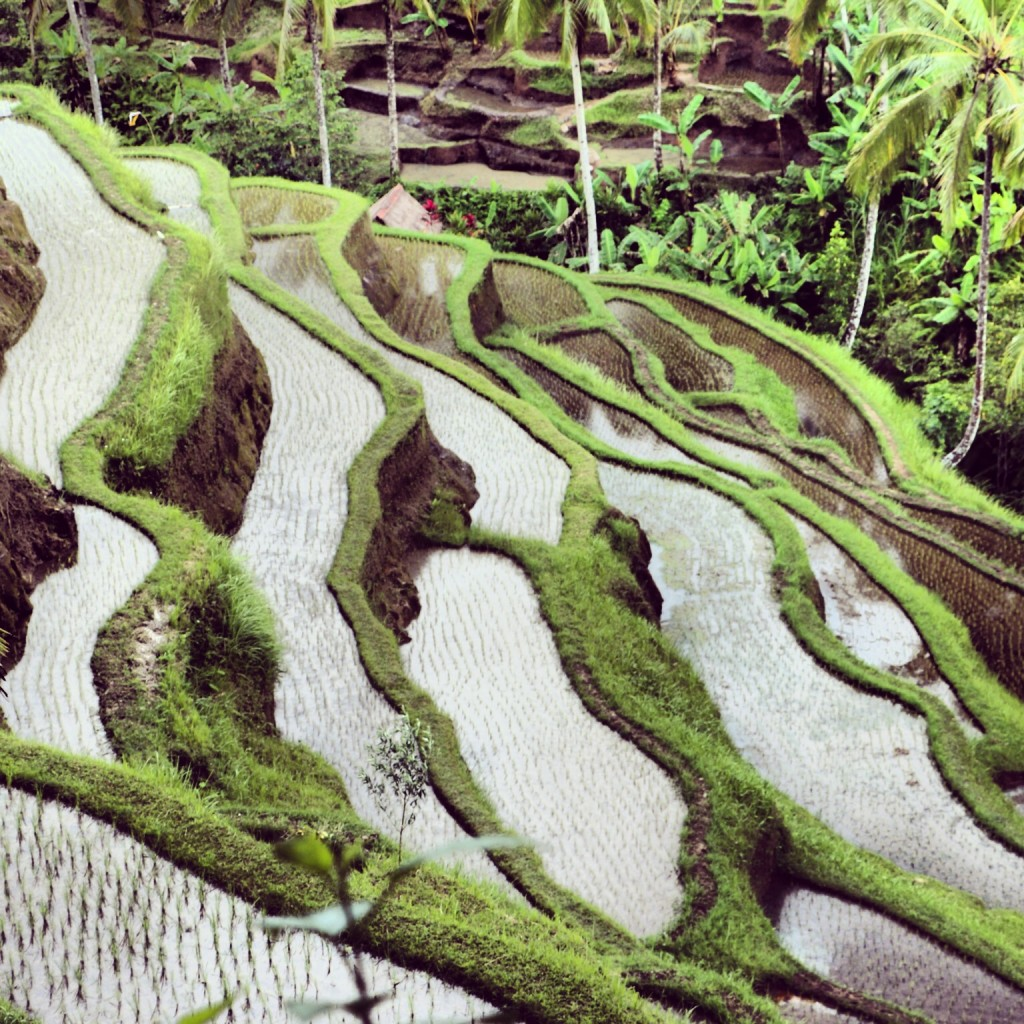 Tegallalang Rice Paddy Fields Bali Indonesia