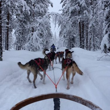 """""""Yoo Hoo, Big Summer Blow Out."""" Lapland Finland"""